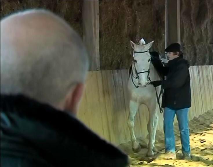 Image d'un entrainement au dressage du cheval blanc Jeitoso accompagné des dresseurs Sami et Michel