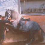 Travail des chevaux