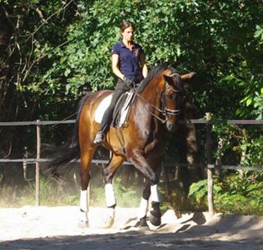 Photo d'entrainement du cheval Argentino