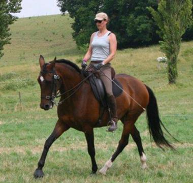 Photo du cheval brun Ariola lors de son entrainement dans les champs