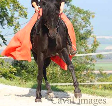Photo du cheval Cordobes