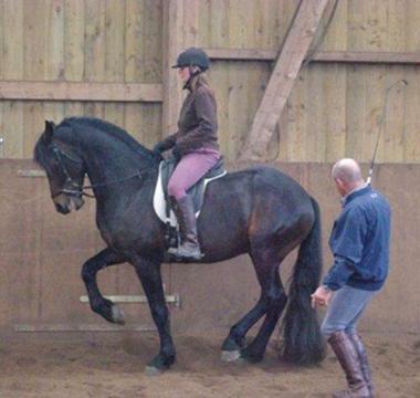 Photo de l'entrainement de dressage du cheval Mykonos