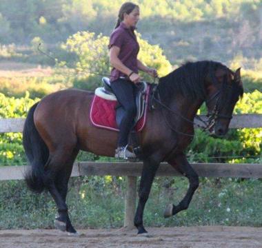 Photo de l'entrainement du cheval Rumboso-XXX