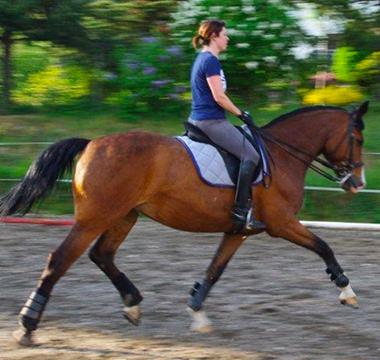 Photo du cheval brun Scientia lors de son entrainement