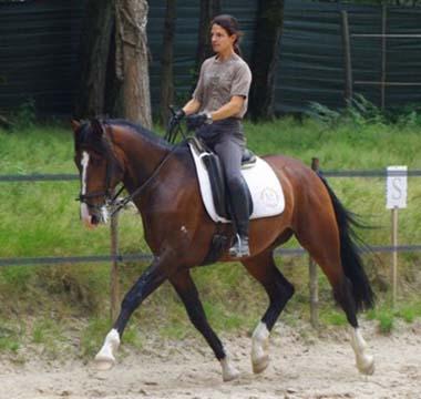 Entrainement de dressage pour le cheval Ubio de Moita