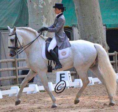 Photo de la prestation du cheval Urtigao lors du concours de dressage