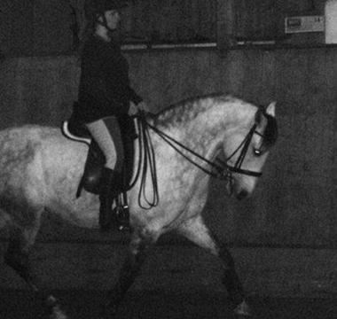 Photo du cheval Vai-Quem-Quer lors de son entrainement de dressage