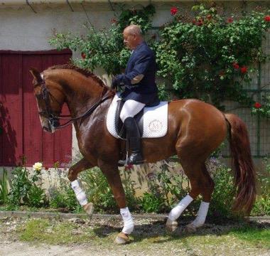 Photo du cheval brun Zeus avant son passage au concours de dressage